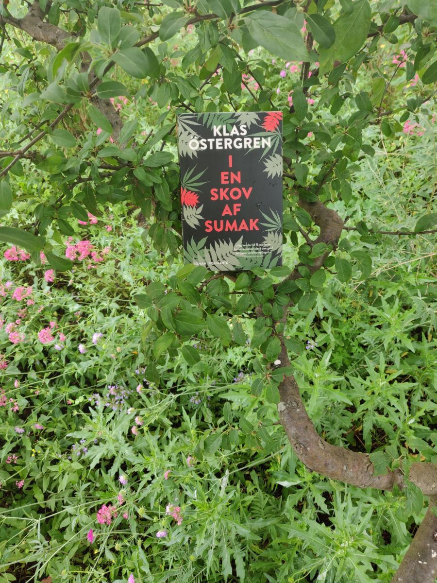 I en skov af sumak