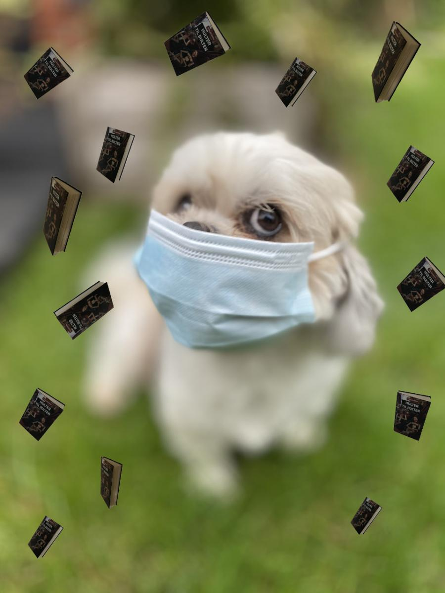 Hund med mundbind